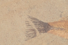 Aquatic+Sandstone_V2_12x12