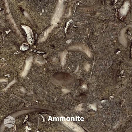 Ammonite_V2_12x12
